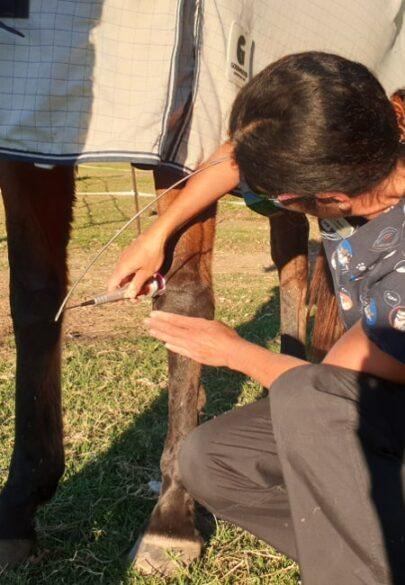 Dr-Anita-K-Laser-Treatment-Horse-min